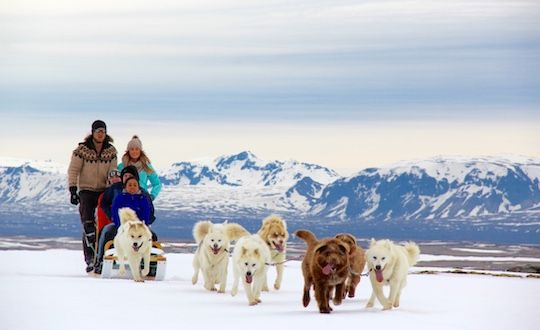 Winter Dog Sledding Tour With Transfer From Reykjavik
