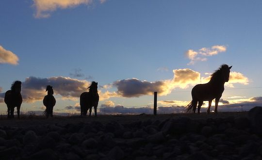 Midnight Sun Horse Riding From Reykjavik